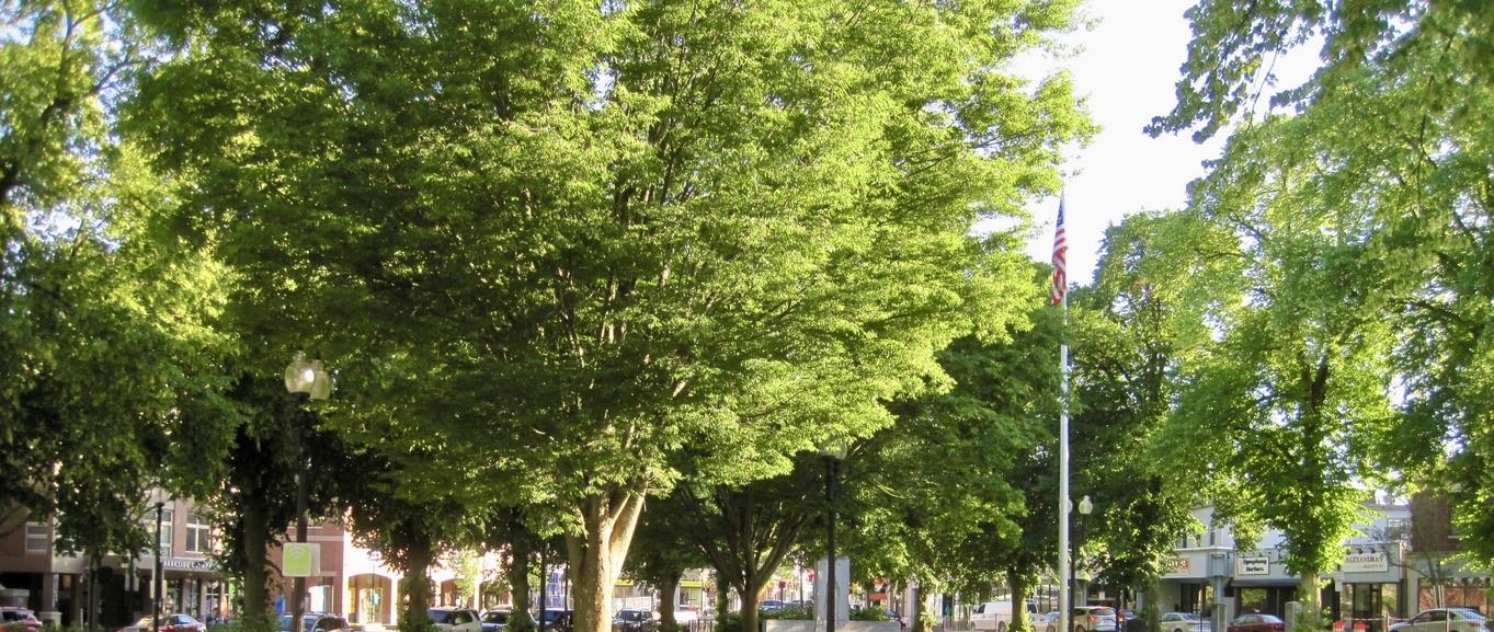 Adams Park in Roslindale