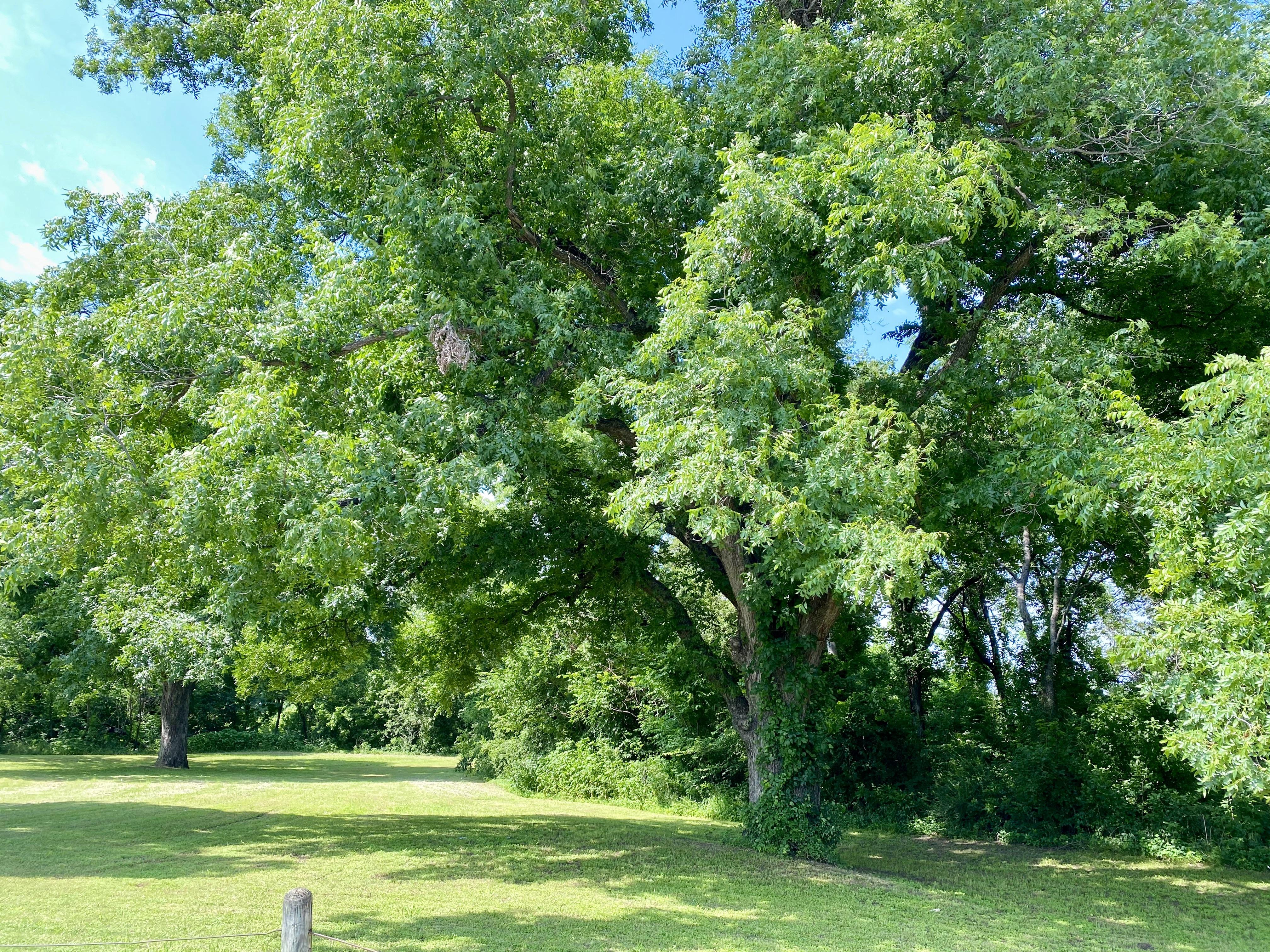Quanah Parker Park near the Trinity River