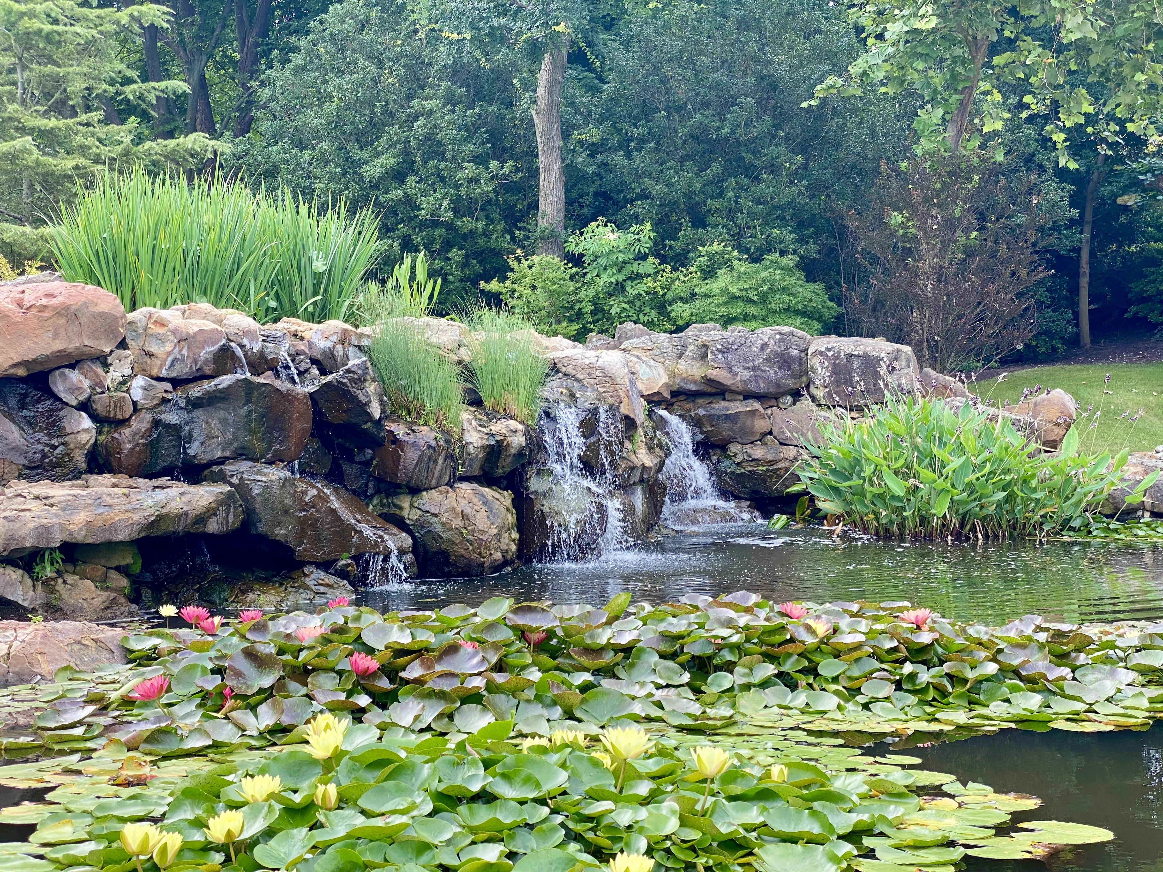 Lily Pond at the Dallas Arboretum