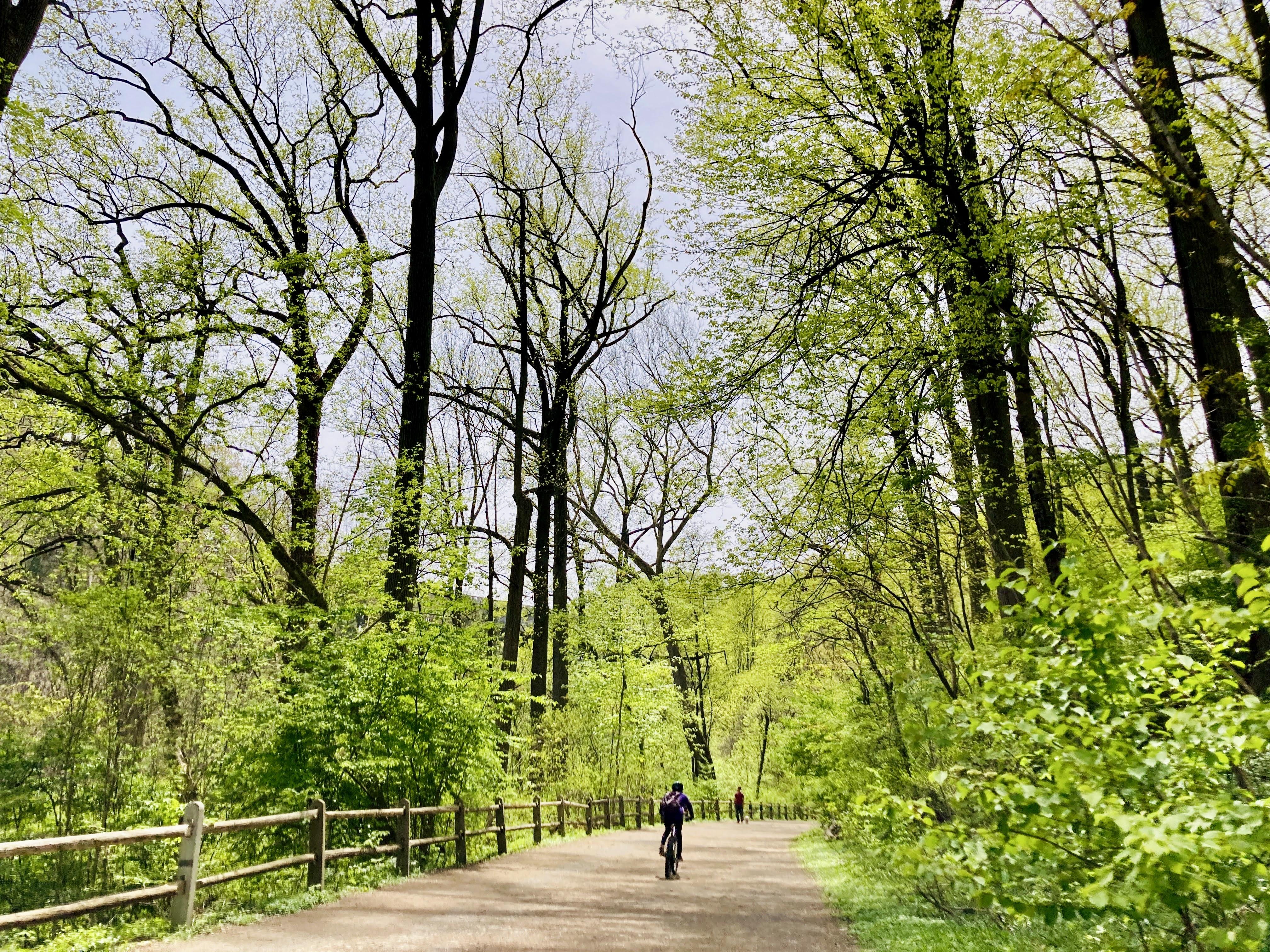 Forbidden Drive in Wissahickon Valley Park