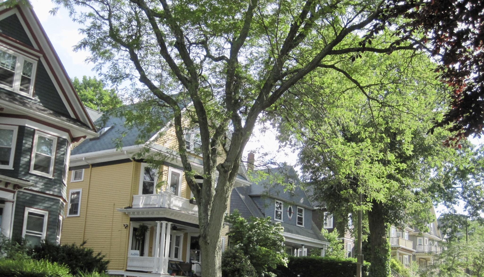 Single Family Dorchester Homes